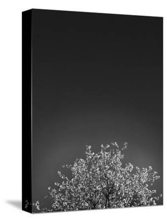 Twinkling Lights 1-Design Fabrikken-Stretched Canvas Print