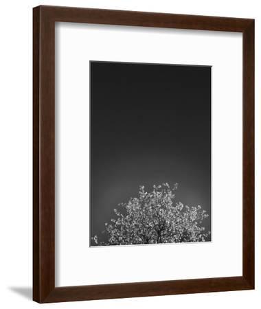 Twinkling Lights 1-Design Fabrikken-Framed Photographic Print