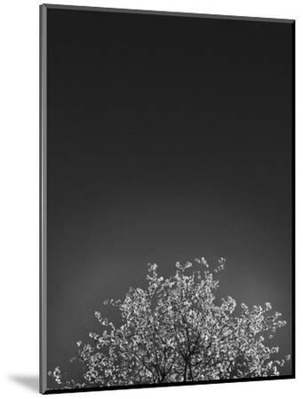 Twinkling Lights 1-Design Fabrikken-Mounted Photographic Print