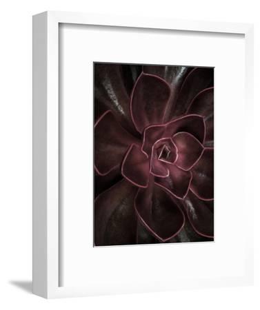 Secret 16-Design Fabrikken-Framed Photographic Print