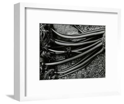 Rock and Kelp, 1978-Brett Weston-Framed Photographic Print