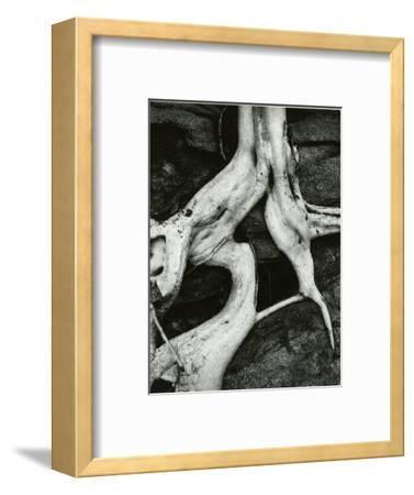 Roots, Baja, California, 1966-Brett Weston-Framed Photographic Print