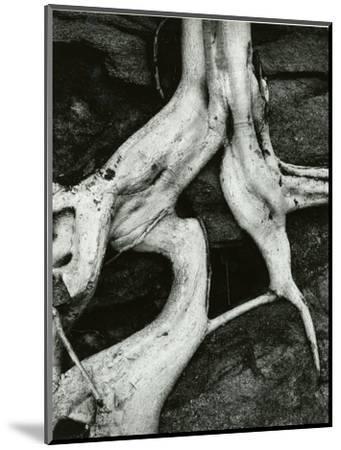 Roots, Baja, California, 1966-Brett Weston-Mounted Photographic Print