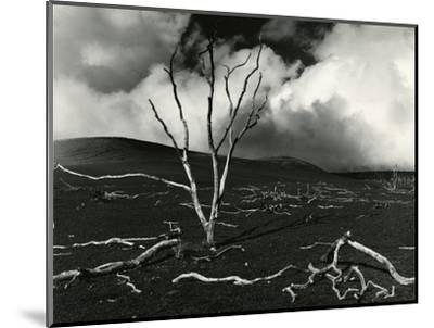 Clouds, Lava, Tree, Hawaii, 1978-Brett Weston-Mounted Photographic Print