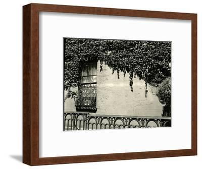 Window, Ivy On Wall, New York, 1945-Brett Weston-Framed Photographic Print