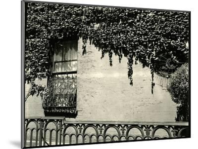 Window, Ivy On Wall, New York, 1945-Brett Weston-Mounted Photographic Print
