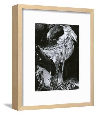 Ice and Rock, Oregon, 1968-Brett Weston-Framed Photographic Print