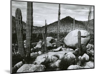 Desert Landscape, Mexico, 1967-Brett Weston-Mounted Photographic Print