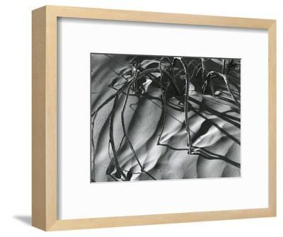 Dead Branches, Detail, White Sands, New Mexico, c. 1940-Brett Weston-Framed Photographic Print