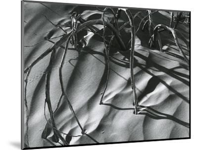 Dead Branches, Detail, White Sands, New Mexico, c. 1940-Brett Weston-Mounted Photographic Print
