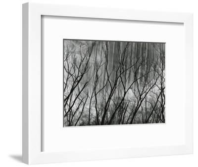 Rock Wall and Trees, Glen Canyon, 1959-Brett Weston-Framed Photographic Print