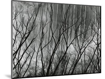 Rock Wall and Trees, Glen Canyon, 1959-Brett Weston-Mounted Photographic Print