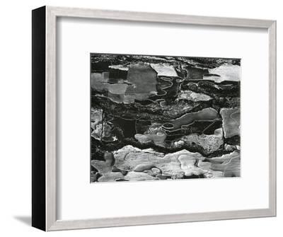 Tree Bark, c.1970-Brett Weston-Framed Photographic Print