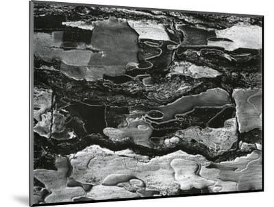 Tree Bark, c.1970-Brett Weston-Mounted Photographic Print