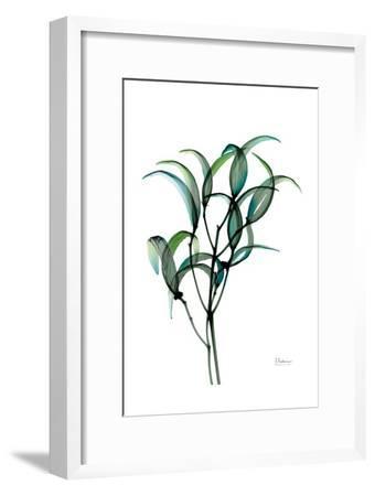 Shimmering Botanical 1-Albert Koetsier-Framed Art Print