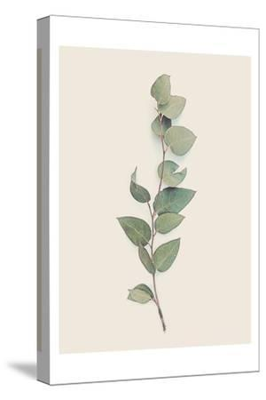 Tiny Branch-Urban Epiphany-Stretched Canvas Print