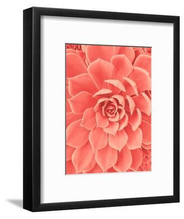 Coral Succulent-Urban Epiphany-Framed Photographic Print