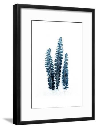 Fern Fronds Baltic Sea-Urban Epiphany-Framed Art Print