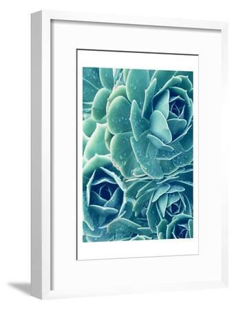 Succulents With Dew 2-Urban Epiphany-Framed Art Print