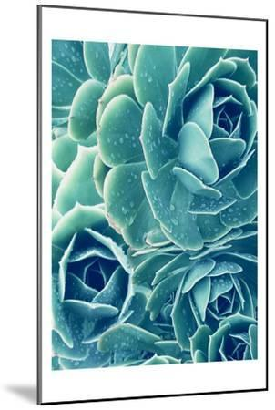 Succulents With Dew 2-Urban Epiphany-Mounted Art Print