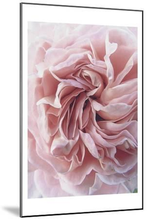 Rose-Urban Epiphany-Mounted Art Print