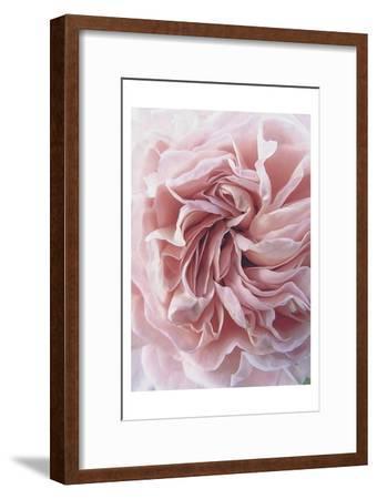 Rose-Urban Epiphany-Framed Art Print