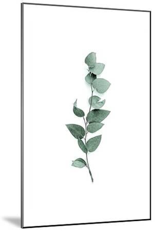 Tender Leaves 3-Urban Epiphany-Mounted Art Print