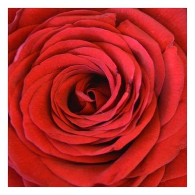Heart Of The Rose-Sheldon Lewis-Framed Art Print