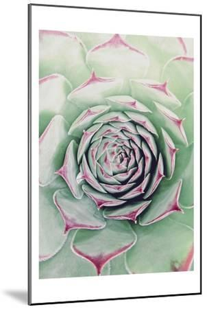 Succulent Red Tips-Urban Epiphany-Mounted Art Print
