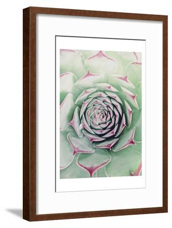 Succulent Red Tips-Urban Epiphany-Framed Art Print