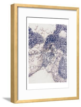 Shells 1-Urban Epiphany-Framed Art Print