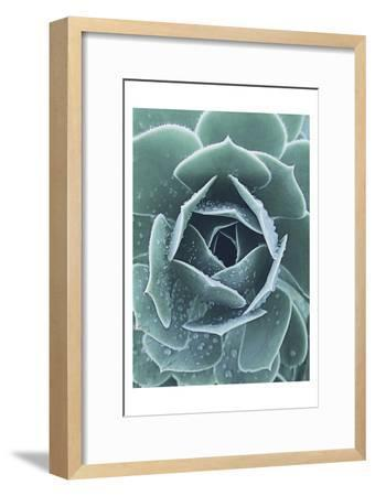 Succulent With Dew 1-Urban Epiphany-Framed Art Print