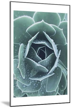 Succulent With Dew 1-Urban Epiphany-Mounted Art Print