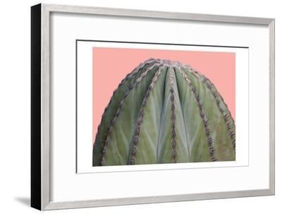Cactus Ball-Sheldon Lewis-Framed Art Print