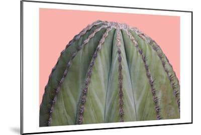 Cactus Ball-Sheldon Lewis-Mounted Art Print