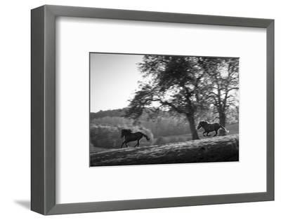 Horses running at sunset, Baden Wurttemberg, Germany-Panoramic Images-Framed Photographic Print