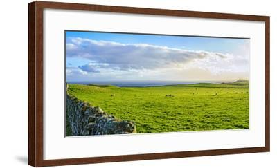 Stone fence along pasture with Sheep grazing, Moray Firth near Brora, Scotland-Panoramic Images-Framed Photographic Print