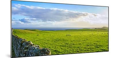 Stone fence along pasture with Sheep grazing, Moray Firth near Brora, Scotland-Panoramic Images-Mounted Photographic Print