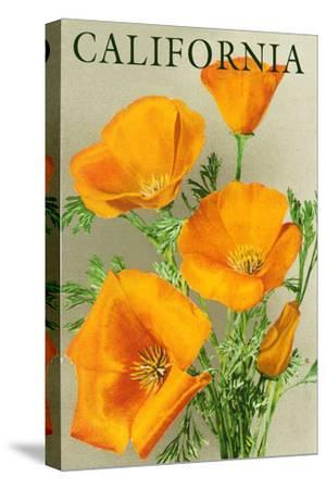 California - Poppies-Lantern Press-Stretched Canvas Print