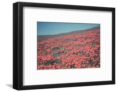 California Blooms III-Elizabeth Urquhart-Framed Photographic Print