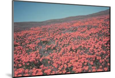 California Blooms III-Elizabeth Urquhart-Mounted Photographic Print