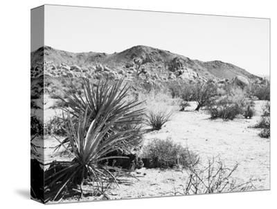 Road Trip II Crop-Elizabeth Urquhart-Stretched Canvas Print