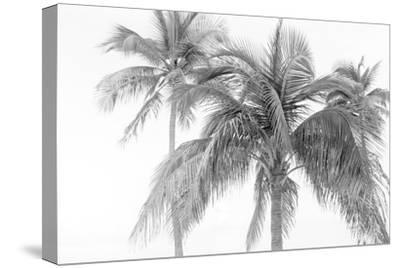 Breezy IV-Elizabeth Urquhart-Stretched Canvas Print