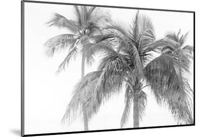 Breezy IV-Elizabeth Urquhart-Mounted Photographic Print