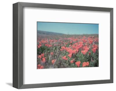 California Blooms I-Elizabeth Urquhart-Framed Photographic Print