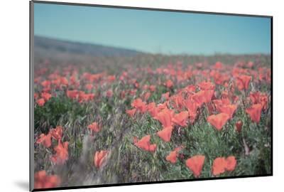 California Blooms I-Elizabeth Urquhart-Mounted Photographic Print