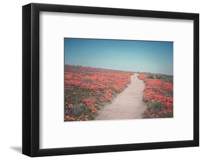 California Blooms IV-Elizabeth Urquhart-Framed Photographic Print