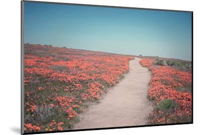 California Blooms IV-Elizabeth Urquhart-Mounted Photographic Print