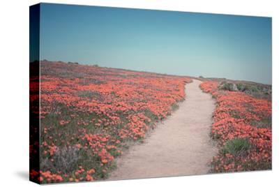 California Blooms IV-Elizabeth Urquhart-Stretched Canvas Print