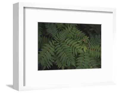 Leafy VI-Elizabeth Urquhart-Framed Photographic Print